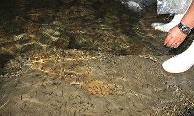 Bayburt'ta Baraj ve Göletler Balıklandırılıyor