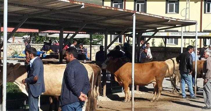 Bayburt'ta Canlı Hayvan Pazarı Tekrar Açıldı