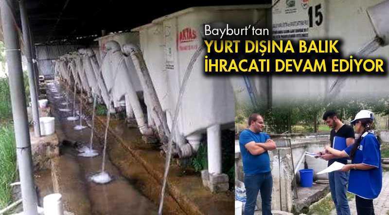 Bayburt'tan Yurt Dışına Balık İhracatı Devam Ediyor
