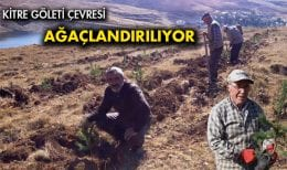 Kitre Köyü Göleti Ağaçlandırılıyor