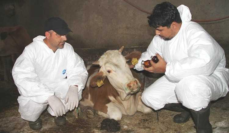 Bayburt'ta Şap Hastalığı Masaya Yatırıldı
