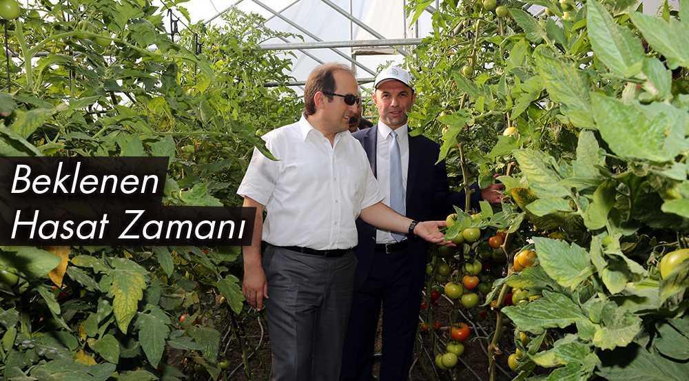 Bayburt'a Beklenen Sebze ve Meyvenin Hasat Zamanı