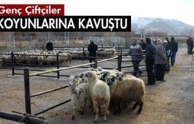 Bayburt'ta Genç Çiftçilere 812 Baş Damızlık Koyun Dağıtıldı