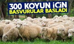 300 Koyun Projesinde Başvurular Başladı