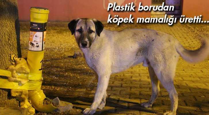 Üniversite Öğrencisi Plastik Borudan Köpek Mamalığı Üretti