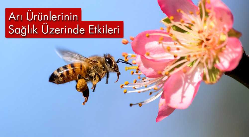 Bayburt'ta Arı Ürünlerinin Sağlık Üzerinde Etkileri Anlatıldı