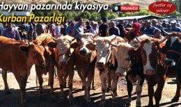 Bayburt'ta Hayvan Pazarında Kıyasıya Kurban Pazarlığı