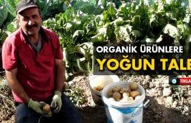 Bayburt'ta Organik Meyve ve Sebzeler Yoğun Rağbet Görüyor