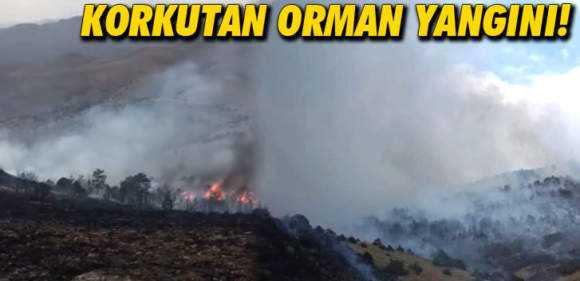 Bayburt'ta Korkutan Orman Yangını Kontrol Altına Alındı