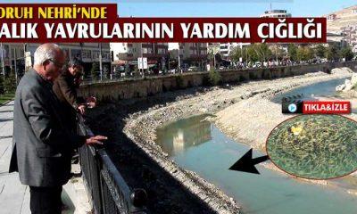 Çoruh Nehrinde Binlerce Balık Yavrusunun Yardım Çığlığı